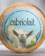 Cabriolait-Belgian-Goat